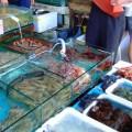 写真: 多くの水産品が並ぶ