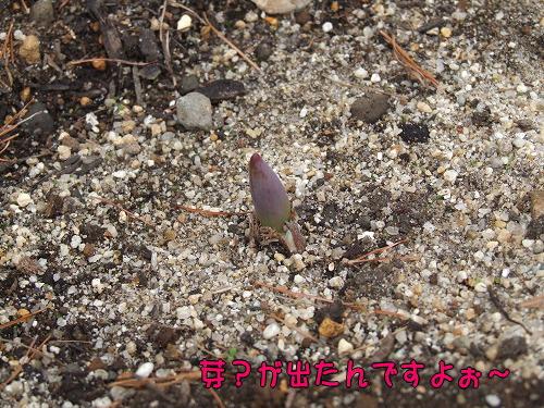 s-myu2008_1209(040)