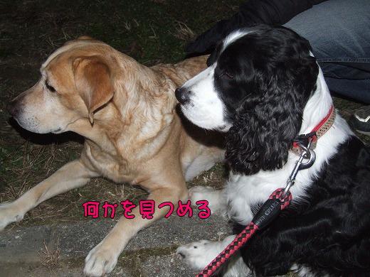 s-myu2008_1228(046)