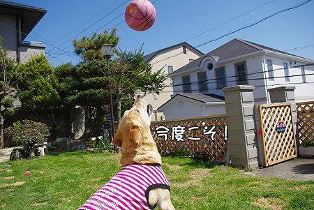 s-myu2009_0330(075)