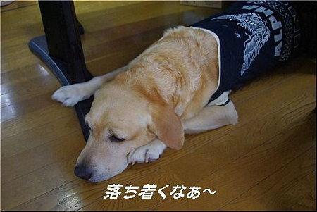 s-myu2009_0505(011)