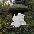 Photos: 燈篭の花