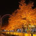 写真: ドーム前・ライトアップされた街路樹