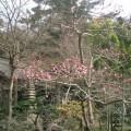 06.03.12鎌倉「覚園寺」梅の季節