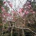09)鎌倉「覚園寺」。