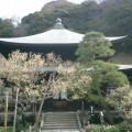 06.03.12鎌倉「瑞泉寺」梅の季節