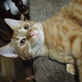 写真: 2014年6月21日のトラちゃん(1歳未満)