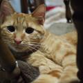 Photos: 2014年6月21日のトラちゃん(1歳未満)