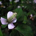 Photos: 夜半の白花