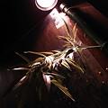 写真: 笹壁一灯