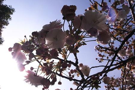 半透明の花束
