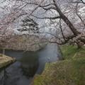 Photos: 曇天の弘前城@弘前公園