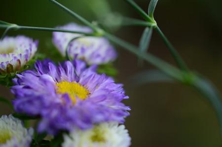初めてみたかな、このお花さん