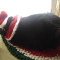 写真: 2007クリスマス10