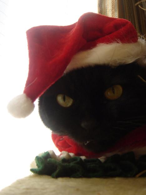 2007クリスマス11