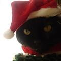 写真: 2007クリスマス11