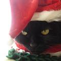 写真: 2007クリスマス12