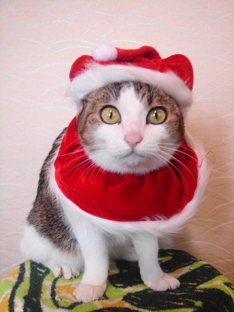 2007クリスマス02