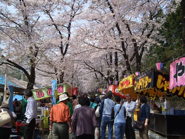 Photos: 赤城千本桜2