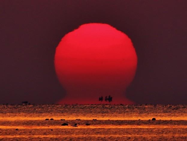太陽:< ダルマ#2 IMG_4470