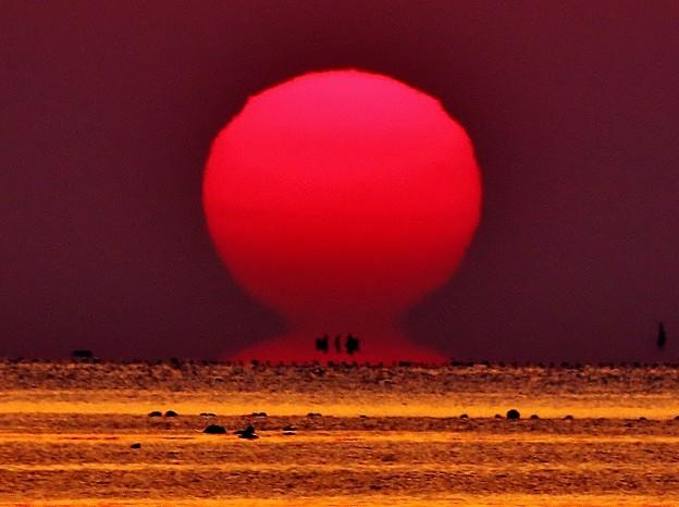太陽:< ダルマ#1 IMG_4482