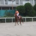 Photos: オオエライジン レース後(第12回 兵庫ダービー)