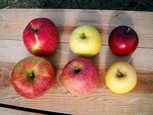 s-試食りんご