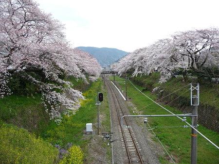 090405-御殿場線桜並木 (11)