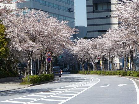 090409-MM21 さくら通り (3)