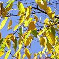 黄葉 紅葉
