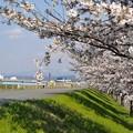 Photos: 春真っ盛り_DSC_2057