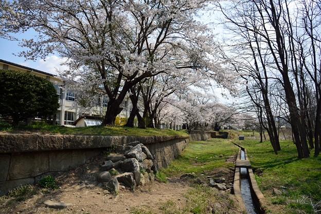 Photos: 龍岡城跡DSC_3480