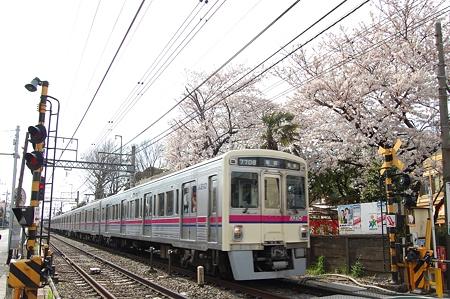 京王線と桜