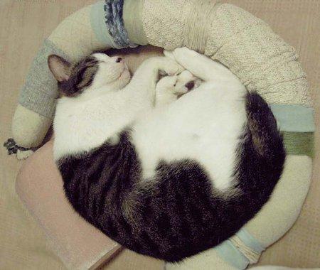 手作り自在枕