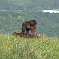 写真: 牛・・・やせっぽち
