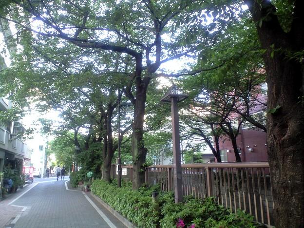 Photos: 目黒川 天神橋付近