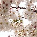 写真: 2009_0329_144941-P1020138