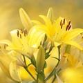 Photos: Happy Yellow