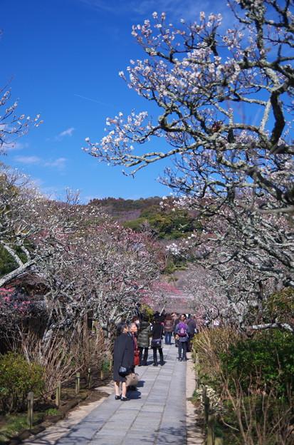 写真: 東慶寺