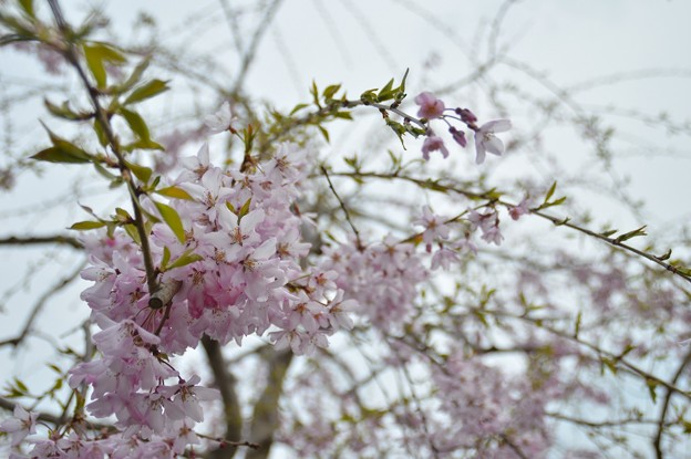 写真: 2014-05-03