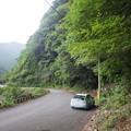 クロウメモドキ(奈良県吉野町)-002