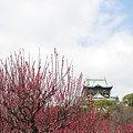 Photos: 梅林から大阪城1