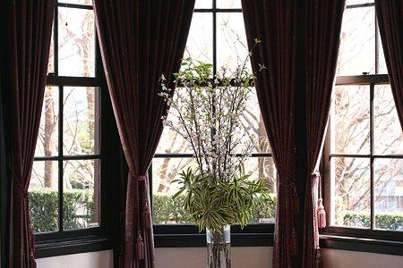 2009.02.22 外交官の家 さくらとカーテン
