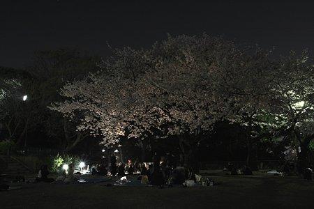 2009.04.07 横浜 夜桜 掃部山公園