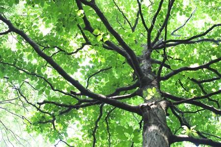 2014.06.02 瀬谷市民の森 大木の下
