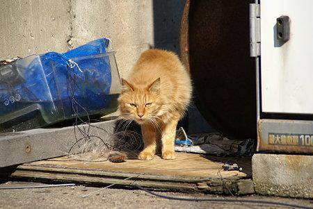 「何かご用~?」 漁港で愛されてる猫・・1