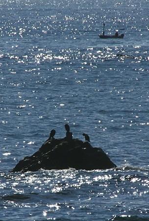 海鳥の三者会談~♪