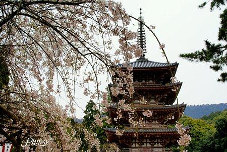 五重塔 京都醍醐寺にて18