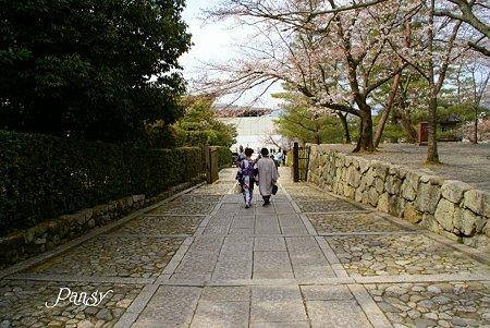 京都 桜さんぽ~6