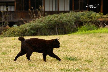 20歳のくろちゃん・・ 三渓園の猫